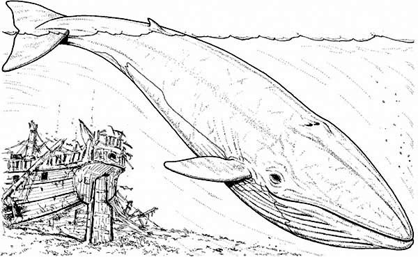 blue whale and an old sinking galeon coloring page kids play color