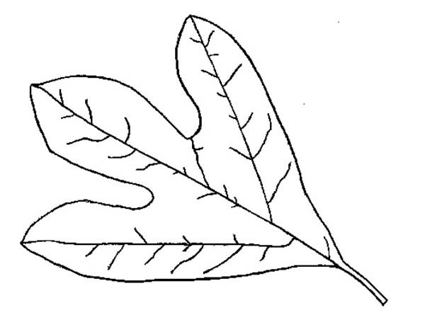 fall leaf coloring page kids play color