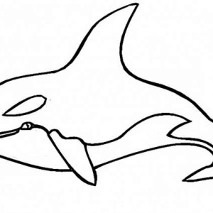 picture of blue whale coloring page picture of blue whale