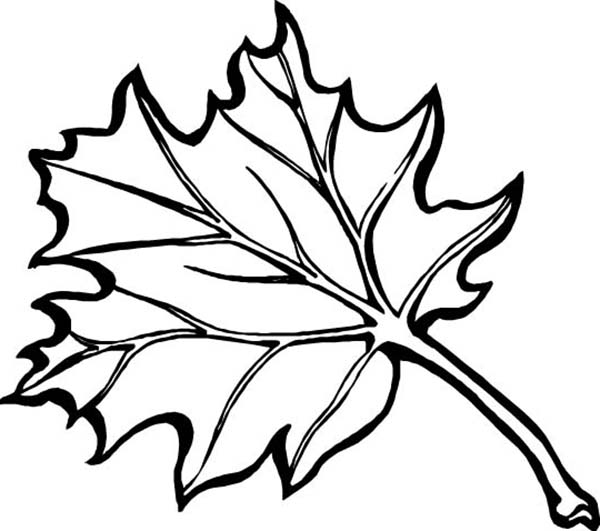 maple fall leaf coloring page kids play color