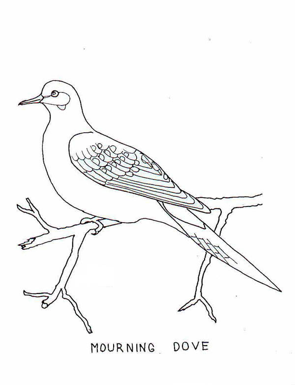 mourning dove coloring page kids play color