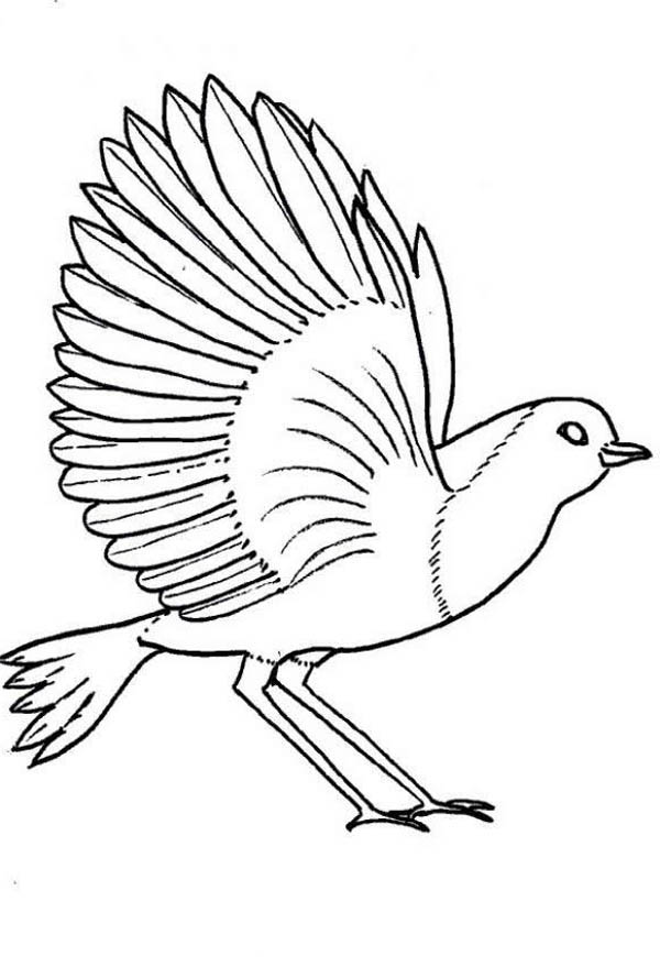 wisconsin robin coloring page wisconsin robin coloring page
