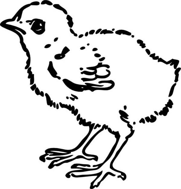 awesome draawing of baby chick coloring page kids play color