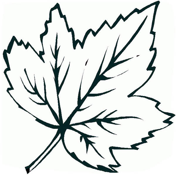 awesome maple leaf picture page kids play color