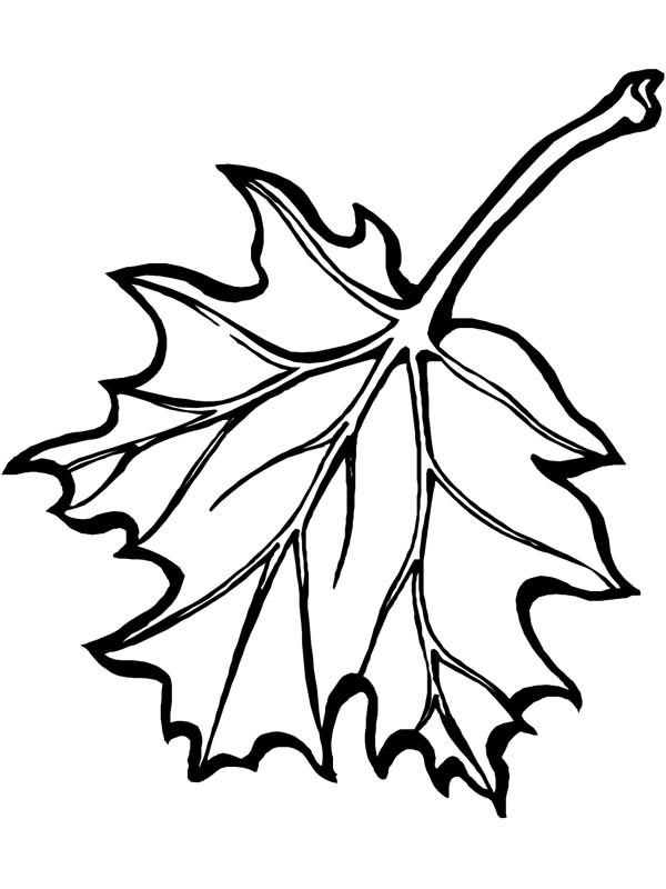 maple leaf coloring pages maple leaf coloring page awesome picture of