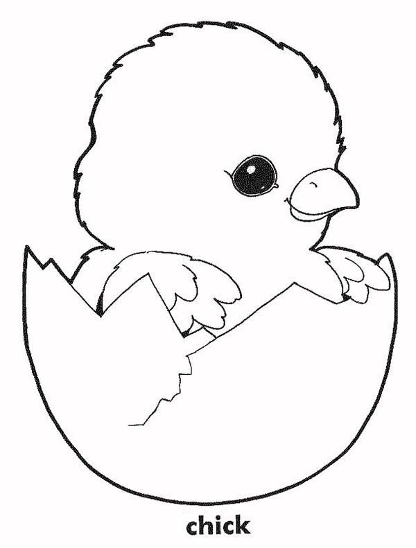 baby chick baby chick in his eggshell coloring page