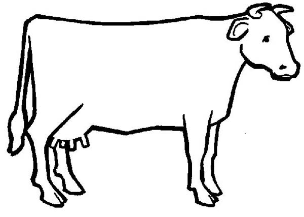 cow cow outline coloring page