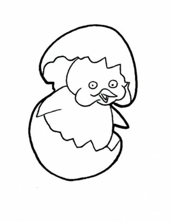 how to draw hatching baby chick coloring page kids play color