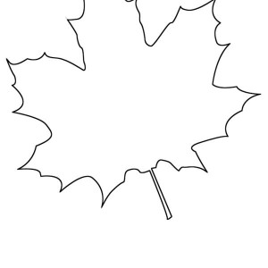 of maple leaf coloring page various type of maple leaf coloring page