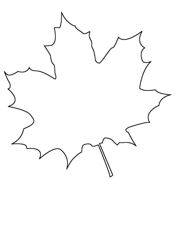 maple leaf how to draw maple leaf coloring page
