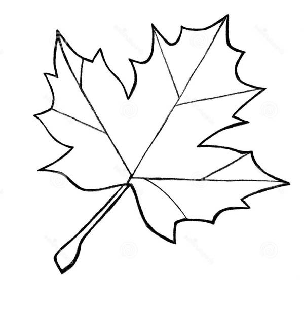 maple leaf sketch coloring page kids play color