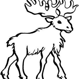 outline of moose coloring page outline of moose coloring page