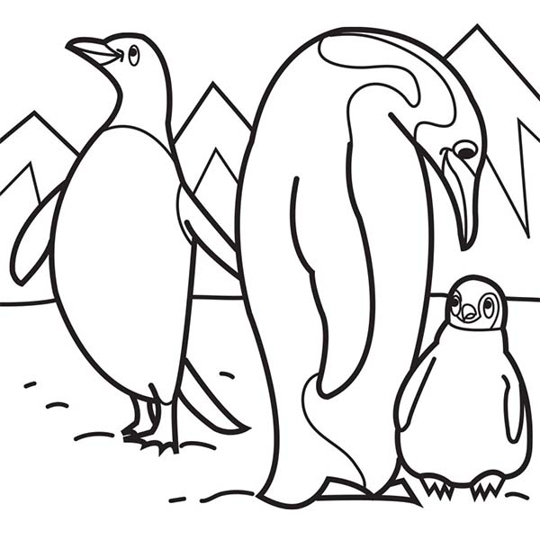 animal pictures on polar animals colouring pages coloring pages for
