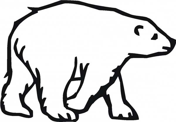 arctic animals picture of arctic animals polar bear page