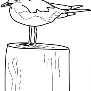 seagull coloring pages realistic coloring pages