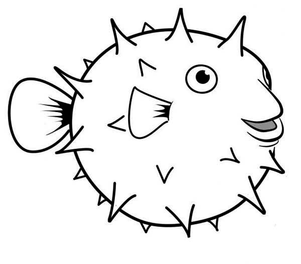 happy globefish puffer fish coloring page kids play color