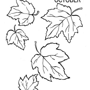 beech tree autumn leaf coloring page kids play color