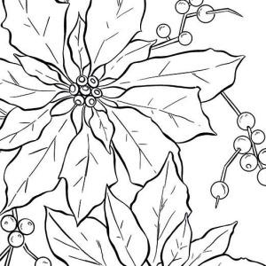 beautiful poinsettia in flowerpot for national poinsettia day