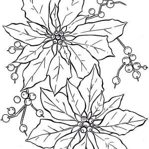 poinsettia coloring page poinsettia coloring page free printable