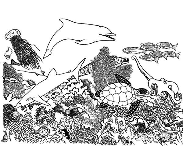 coral reef fish ecosystem coloring pages coral reef fish