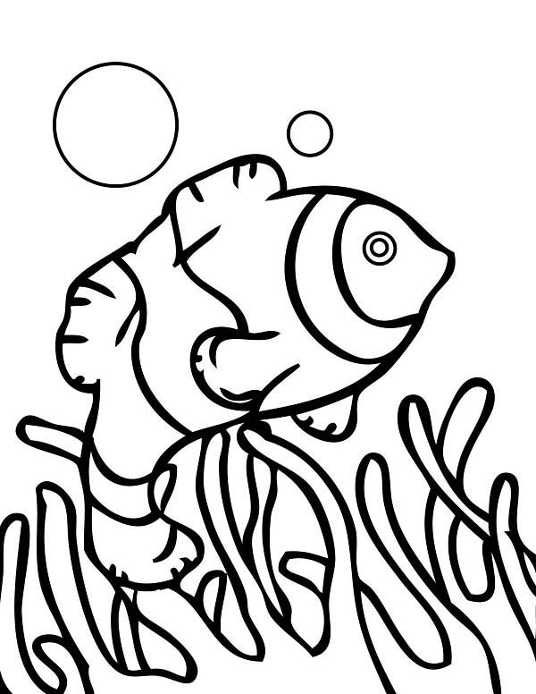 coral reef fish community coloring pages kids play color