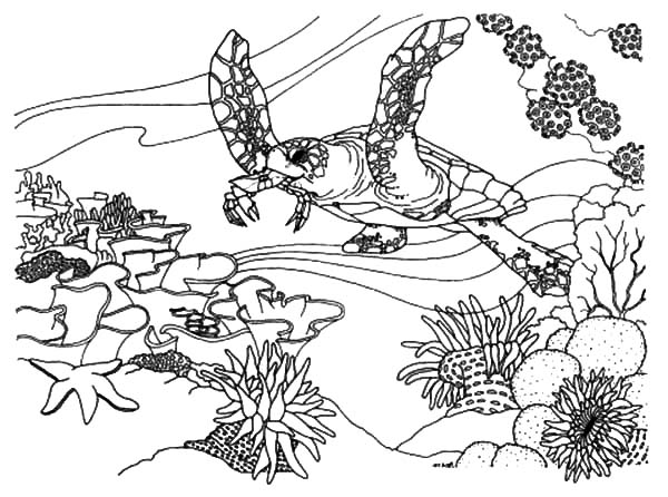 coral reef fish ecosystem coloring pages kids play color