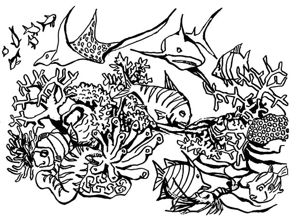 fish in coral reef ecosystem coloring pages kids play color