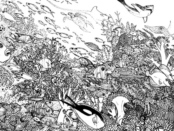 crowded fish and animals in coral reef ecosystem coloring pages
