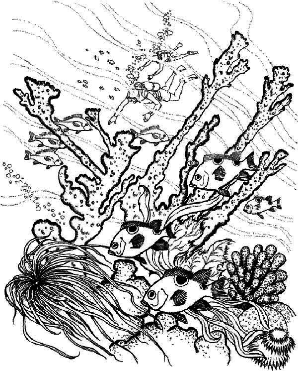 coral reef coloring page coral reef fish underwater world