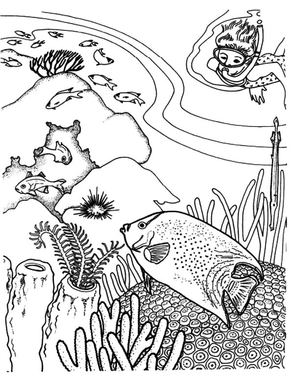 coral reef fish underwater world coloring pages kids play color