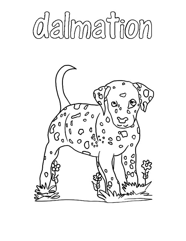 fire dog dalmation coloring pages fire dog dalmation coloring
