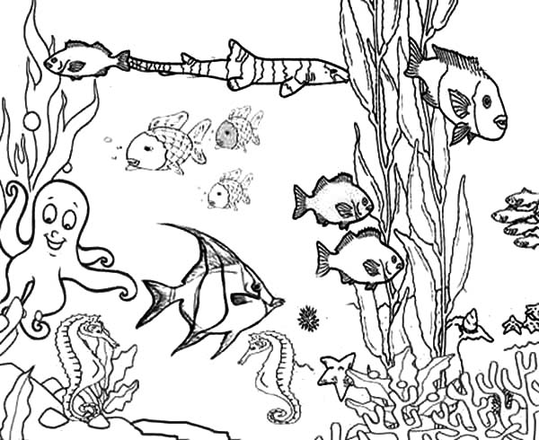 ocean plants among coral reef fish coloring pages kids play color