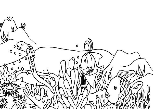 coral reef fish picture coloring pages kids play color
