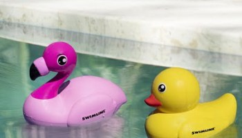 Remote-Controlled-Duck-And-Flamingo