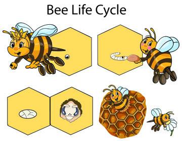bee life cycle activities and lesson for preschool and kindergarten