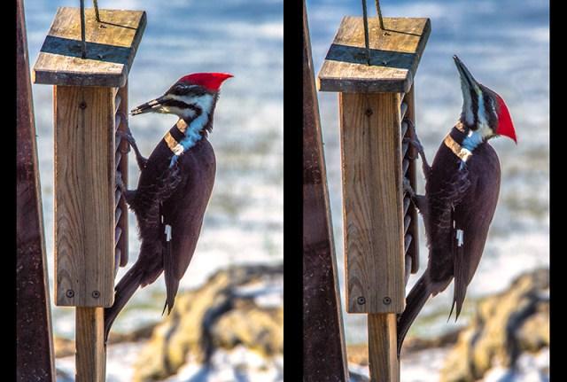 wooodpecker
