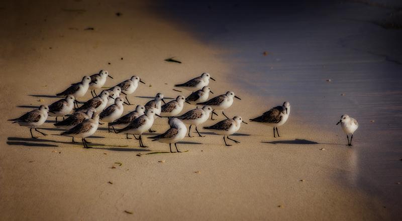 birdonbeach