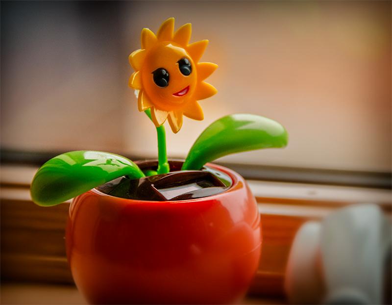 funnyflower