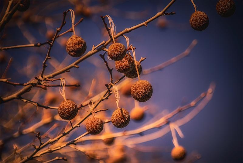 balltree
