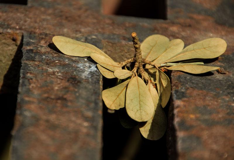 leaffydrop