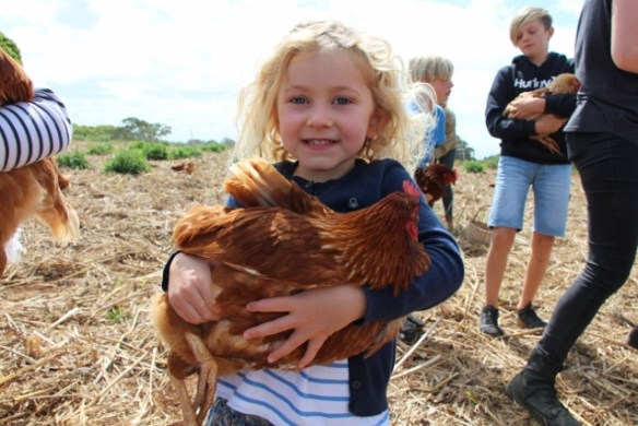 Get up close to a chicken, collect eggs and then cook with what you collect.