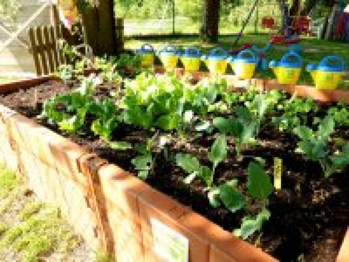Gemüsebeet-Kid-Zone-Kinderbetreuung-1