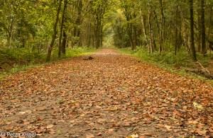 Herfst in Midwolderbos