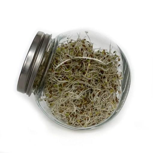 KIEMMpot 400 ml om zelf verse kiemen te kweken