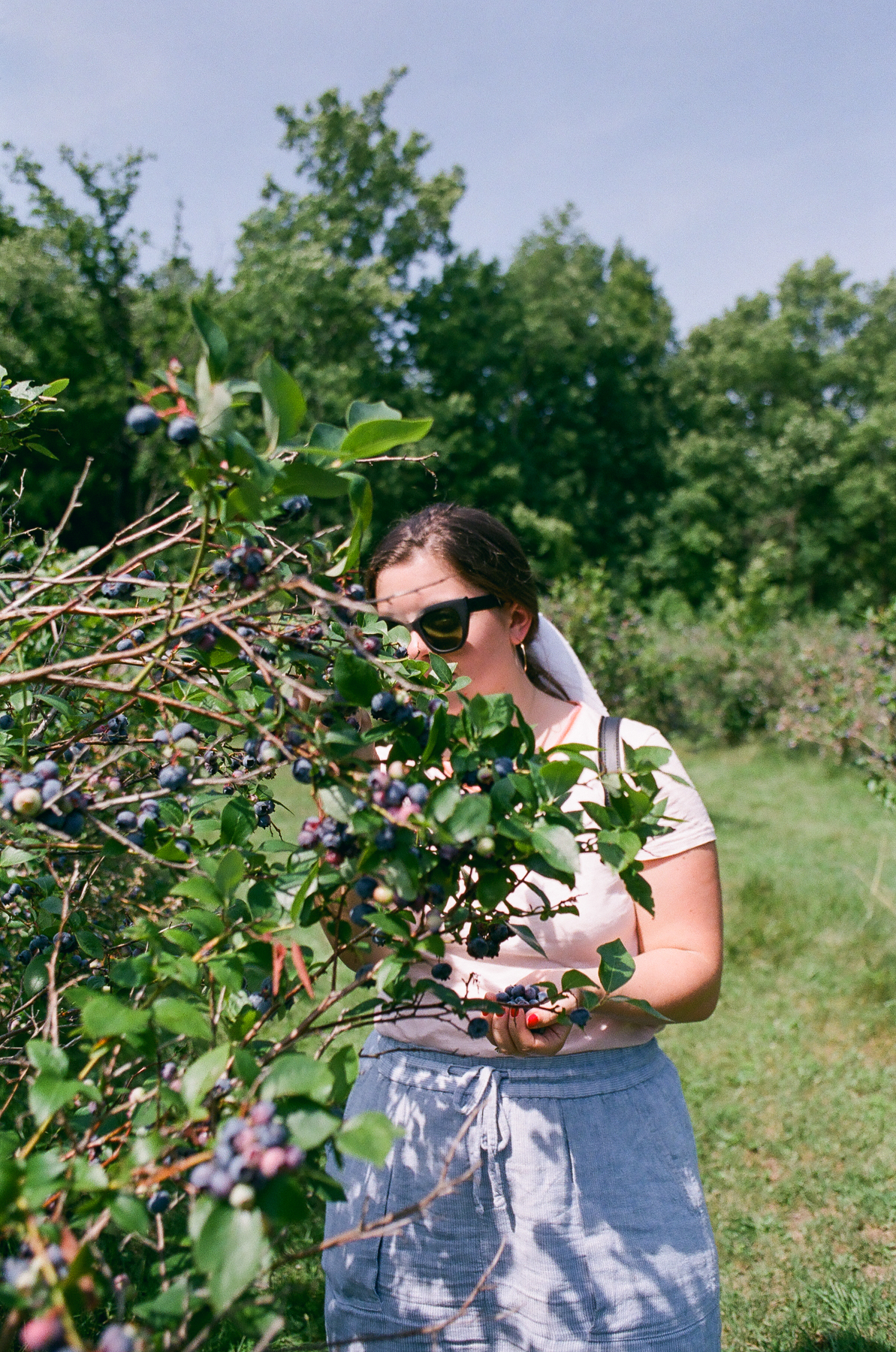 Picking blueberries outside