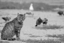 street cats of Szczecin 002