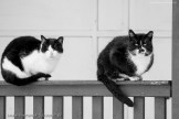 street cats of Szczecin 010