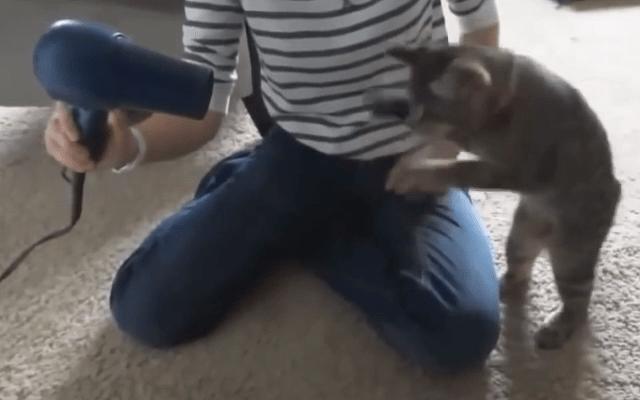 Sopleteando al gatito