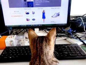 Bichina compra en Internet