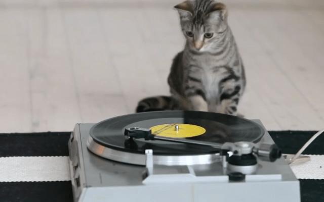 Gato y tornamesa